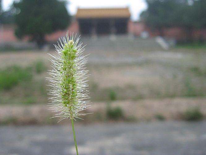 Chine131